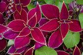 Flowers used for Hawaiian flower leis — Stock Photo