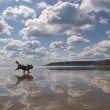 Stock Photo: Beach Reflections with Dog.