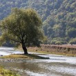 Tree on a river - Stockfoto