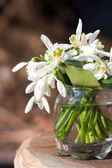Bouquet of snowdrop flowers — Stock Photo