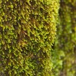 Fresh moss - Stock Photo