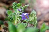 Flores silvestres — Foto Stock