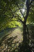 Tree — Stock Photo
