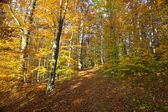 Dense forest. — Stock Photo