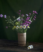 Still life with daisies — Stock Photo