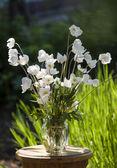 白色的花 — 图库照片
