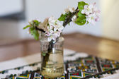Branch of apple blossoms — Stock Photo