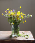 Ramo primaveral — Foto de Stock