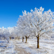 Winter sunny day — Stock Photo