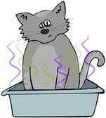 Cat in a litter box — Stock Photo
