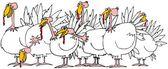 Flock of turkeys — Stock Photo