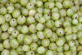 Gooseberry background — Stock Photo