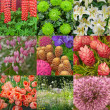 Flowers collage — Stock Photo #13477015