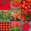 Collage with red flowers,vegetables and berries - Stock Photo