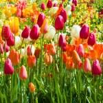 Spring flowers — Stock Photo #46058175