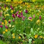 Spring flowers — Stock Photo #46058509