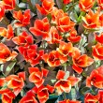 Spring flowers — Stock Photo #46059463