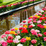 Spring flowers — Stock Photo #46060481