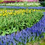Spring flowers — Stock Photo #46060611