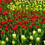 Spring flowers — Stock Photo #46061641