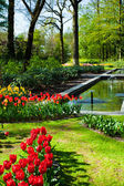 Spring garden landscape — Stock Photo