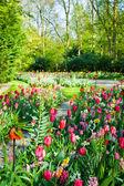 Spring garden landscape — Stock Photo