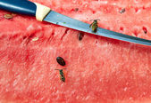 Wasps and knife on watermelon — Stock Photo