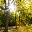 Alley of trees in autumn in the city park — Stock Photo #14345089