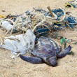 Dead turtle in fishing nets — Stock Photo #20019967