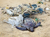 Dead turtle in fishing nets — Foto Stock