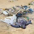 Dead turtle in fishing nets — Stock Photo #22765530