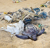 Dead turtle in fishing nets — Stock Photo