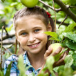 Young girl in an apple orchard — Stock Photo