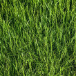 Green grass field texture — ストック写真