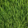 Green grass field texture — Stock Photo