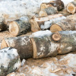 Stock Photo: Sawn trunks of birch