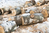 Sawn trunks of birch — Stock Photo