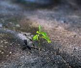 Sprout makes way through crack in asphalt  — Stock Photo