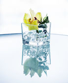 Silhouette orchid in glass — Stock Photo