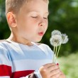 Beautiful Boy in the park blowing on dandelion — Stock Photo #47820927