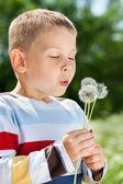 Vackra pojke i parken blåser på maskros — Stockfoto