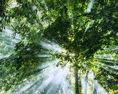 Rays of sunlight through trees from smoke — Foto de Stock