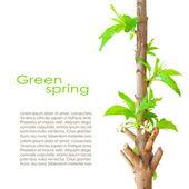 Spring card design — Stock Photo