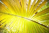 Big palm leaf — Stock Photo