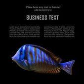 Exotische vissen — Stockfoto