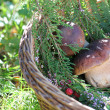 Brown mushroom in wicker basket — Stock Photo