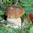 Boletus mushroom in the grass — Stock Photo