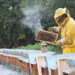 Beekeeper with honeycomb in hand — Stock Photo