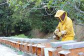 Beekeeper with smoker — Stock Photo