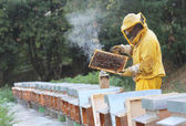 Beekeeper with honeycomb in hand — Stockfoto